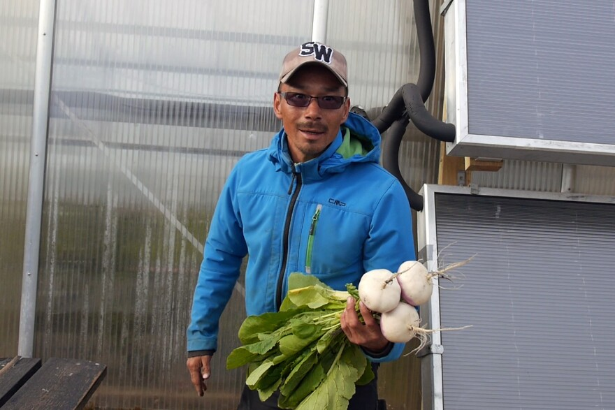 Efa Poulsen grows turnips, potatoes and other vegetables on the Upernaviarsuk farm in southern Greenland.
