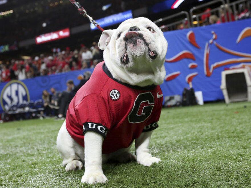 Uga, the University of Georgia mascot, sits near the sideline during the second half of the NCAA Sugar Bowl game against Texas in New Orleans on Jan. 1.
