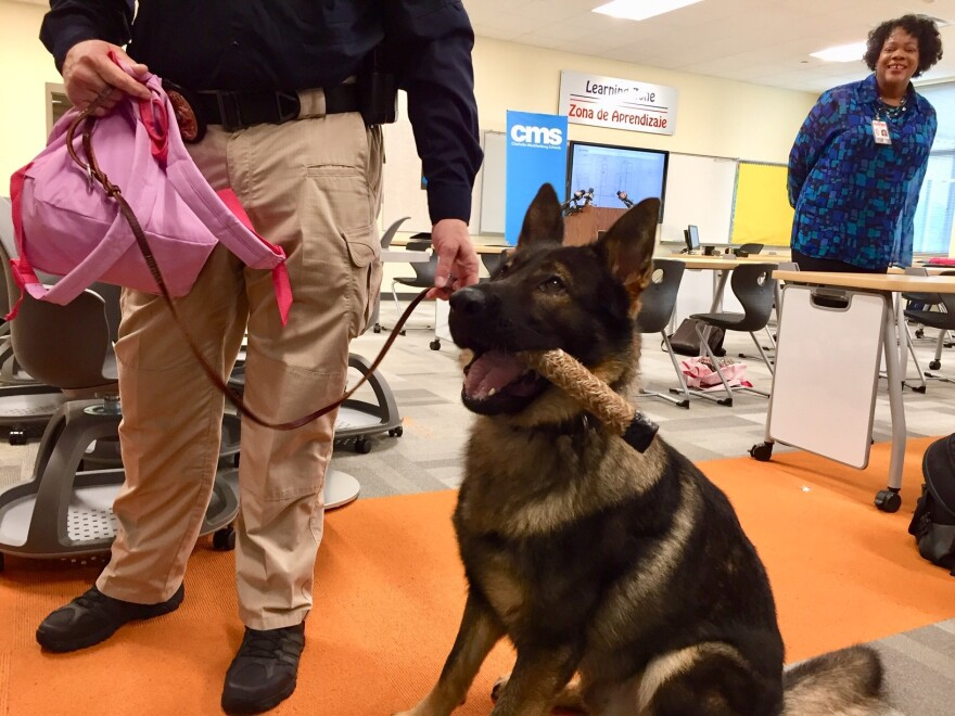 Nico, the CMS gun-sniffing dog, is rewarded with a toy after finding an unloaded gun in a book bag during a demonstration for news media.