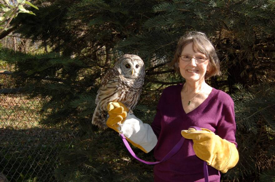 linda_nebbe_with_an_injured_barred_owl..jpg