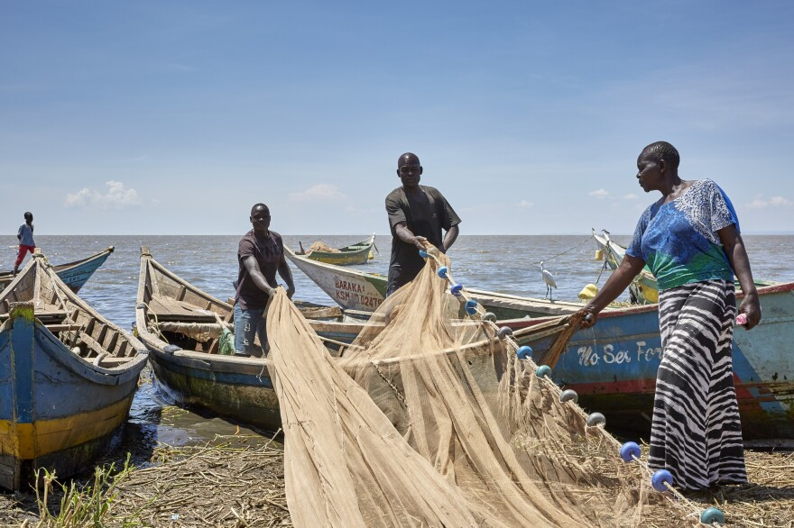 Fishing nets need constant repair and are expensive to replace. After a fishing expedition, the crew lays its nets out on the shore to dry.
