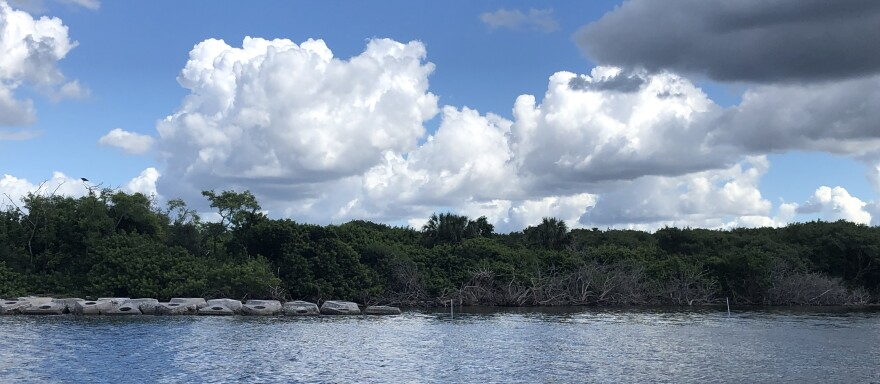 10-11-19_alafia_bird_sanctuary_5.jpg