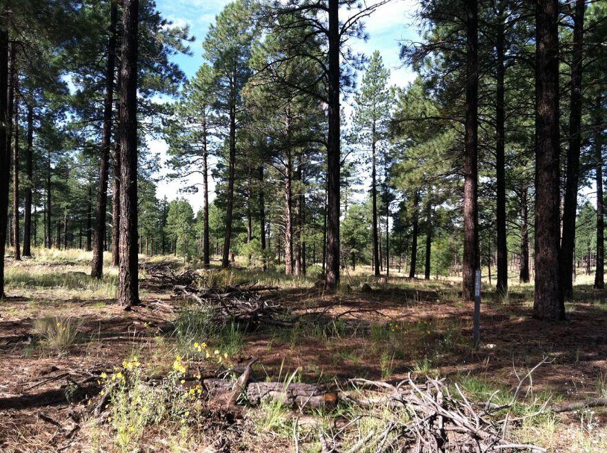 forest_woody_debris.jpg