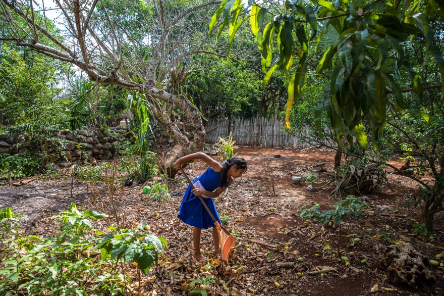 Gelmy, one of the five kids in Maria de los Angeles Tun Burgosa's family, rakes the backyard of their home in Yucatan, Mexico.