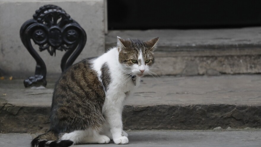 Larry, the No. 10 Downing St. cat, photographed last year, brought some levity to a Brexit media report on Tuesday.