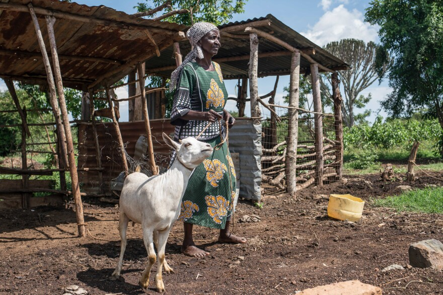 How To Buy A Goat When You're Really Poor? Join A 'Merry-Go-Round ...