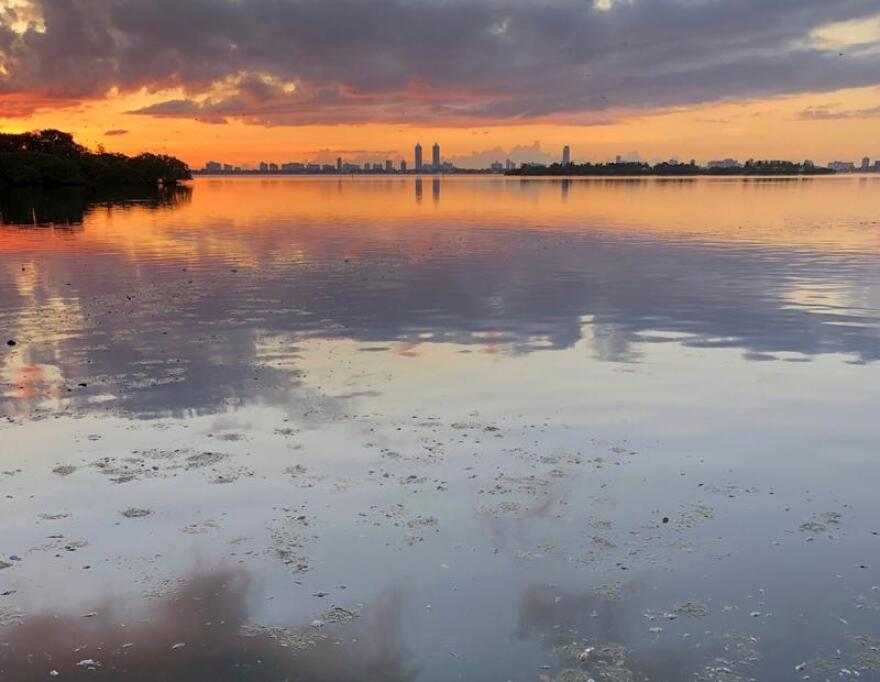 Sunrise showing a fish kill in Biscayne Bay