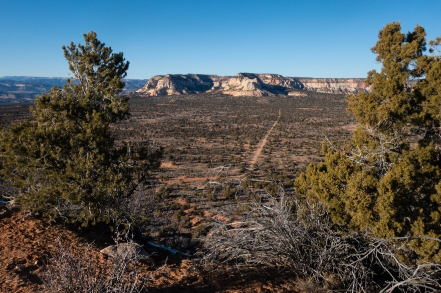 A vista looking out over a dirt road, rows of pine trees and white canyon walls.