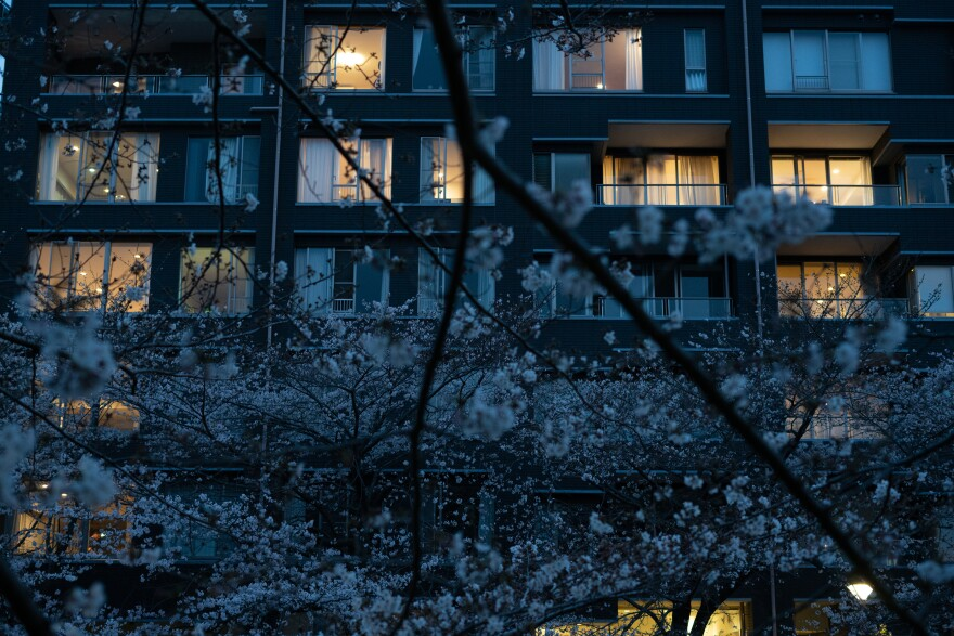 Cherry trees flower along Meguro River on Sunday, a popular blossom viewing destination in Tokyo.