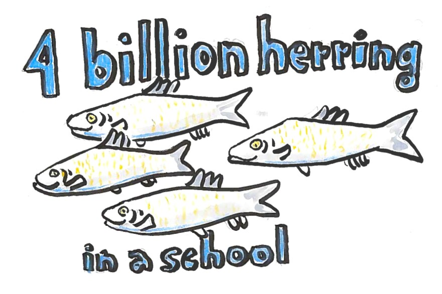 Imagine 4 billion herring in a school.