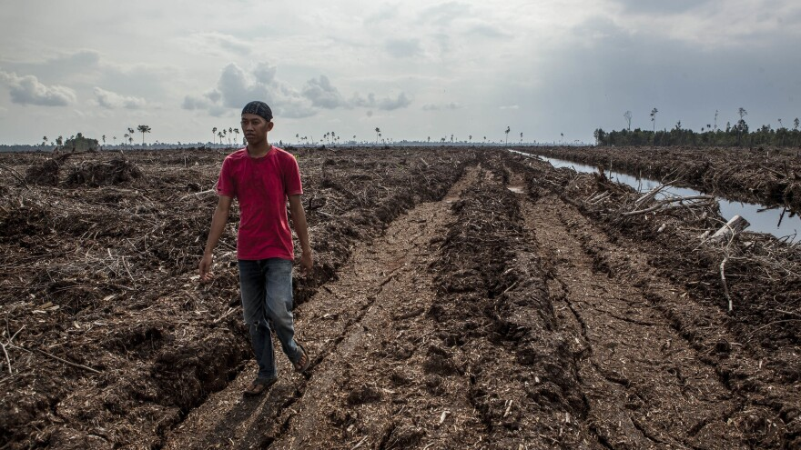 This peat soil in Sumatra, Indonesia, was formerly a forest. Clearing and draining such land releases huge amounts of greenhouse gases.