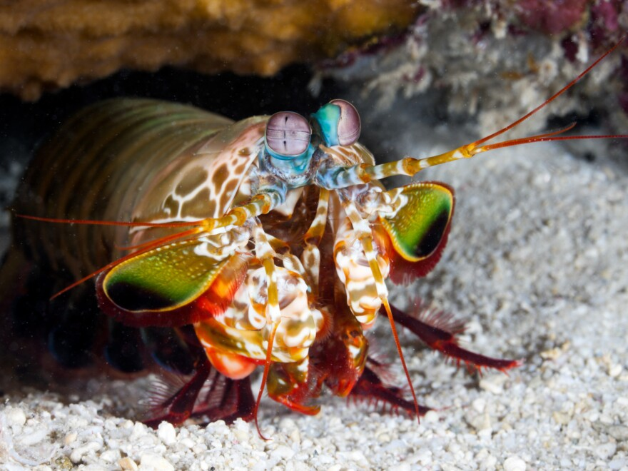 Cavitation produces a bubble that rapidly collapses and becomes hotter than the sun's surface. The mantis shrimp uses it, and now so do food and drink firms, to improve flavors — from yogurt to beer.